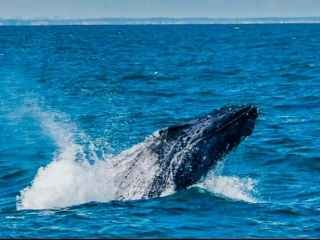 1597762535-avistagem-de-baleias-com-excelentes-profissionais.jpg