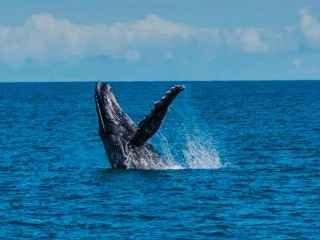 1597762572-baleias-jubarte.jpg