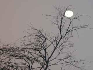 1598280791-lua-cheia-e-seus-encantos.jpg