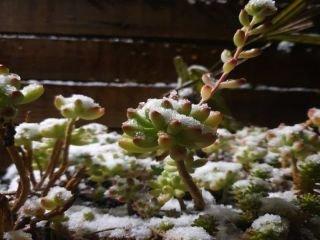 1627698319-neve-canela-e-gramado-2021-4.jpg